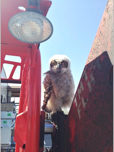 Alpine Lumber Builder Oriented & Residential Lumber Solutions owl gimp - Alpine Lumber Parker